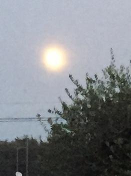 IMG_0957 14夜の月.jpg