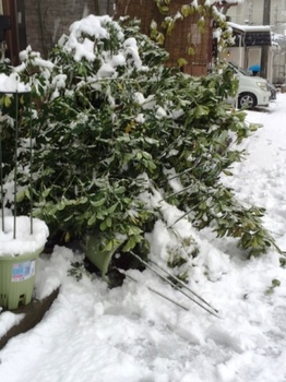 IMG_1644 雪.jpg