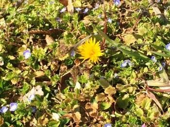 IMG_1864 野原に春.jpg