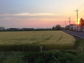 IMG_2667 夕日.jpg